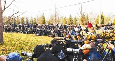 Photographers hoping for a glimpse of the EUROPEAN ROBIN at the Temple of Heaven Park in Beijing. Photo by China Youth Daily.
