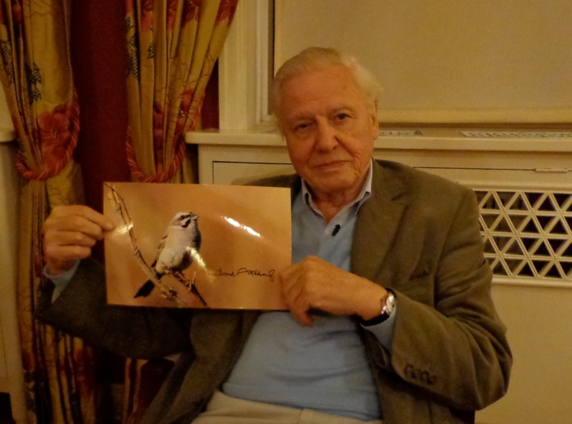 Sir David Attenborough lends his support to the campaign to save Jankowski's Bunting.