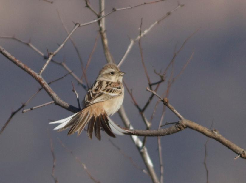 Rare And Scarce Birds In Beijing2016