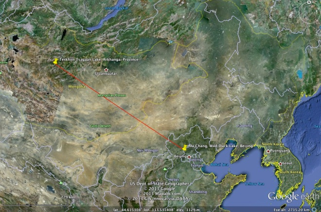 "The journey of Whooper Swan ""1T86"" between 12 July 2012 and 15 November 2012.  A distance of just over 1,500km."