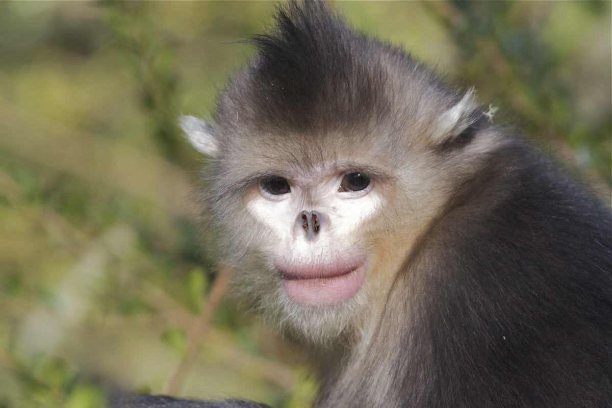 Image result for monkey without nose