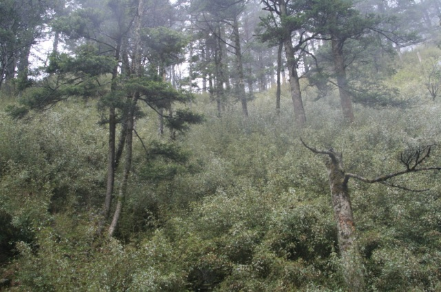 Habitat at Tangjiahe