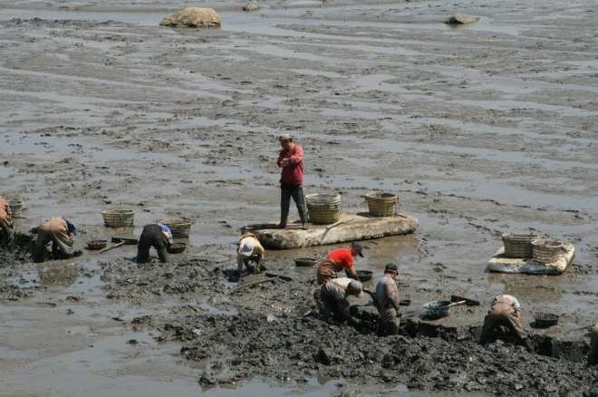 Local shellfish collectors