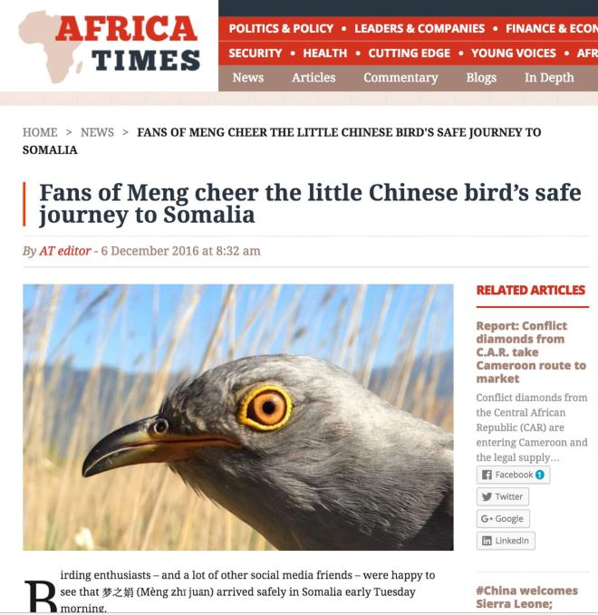 african-times-cuckoos