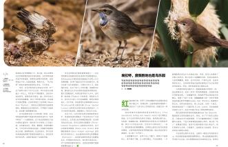 Birding Israel-2