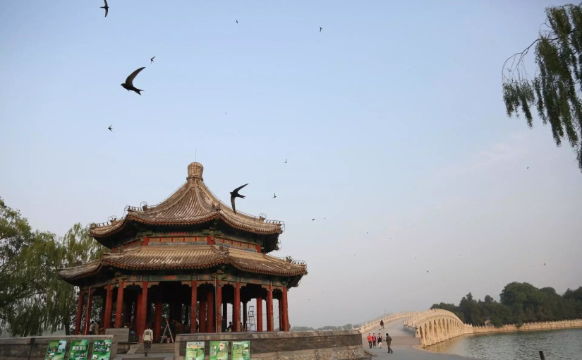 Schools For Swifts: Harrow Beijing to Make and Erect Swift Boxes