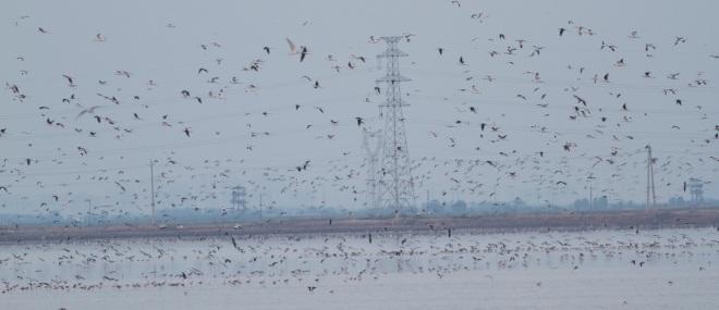 2013-08-21 Birds