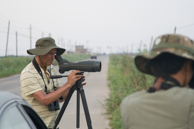 Per shorebirding at Nanpu.