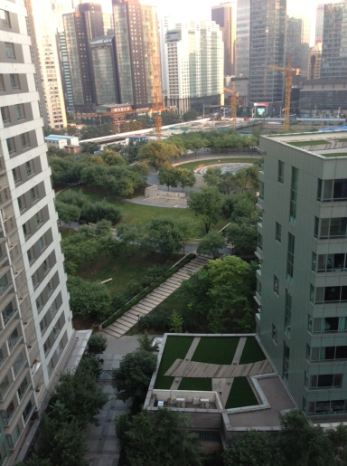 My 'garden' as viewed from the apartment window.  A magnet for migrants.