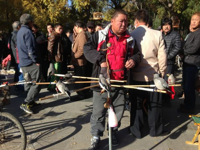 The market at Fuchengmen is just one of Beijing's wild bird markets.  Apparently there are more than 6 in total.