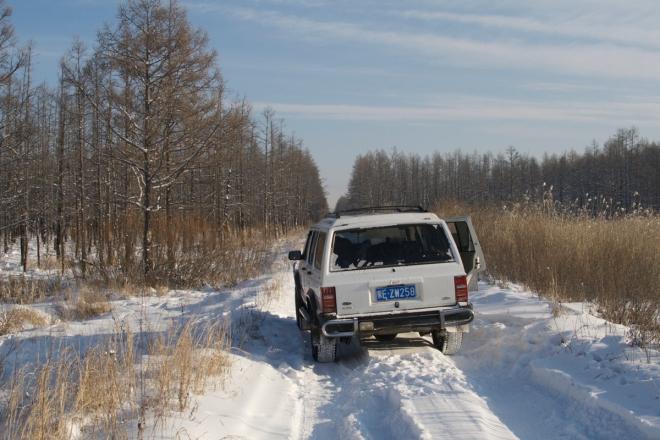 2014-12-22 Hawk Owl habitat2, Wuerqihan, Inner Mongolia