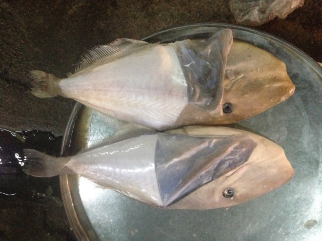 haikou seafood market 2