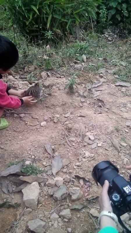 releasing Hainan Partridge