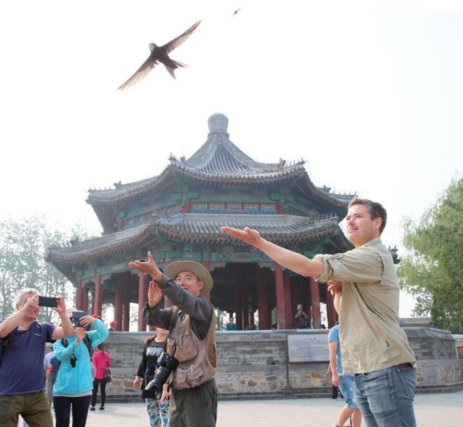 Terry releasing a Swift fitted with a geolocator at The Summer Palace this morning.