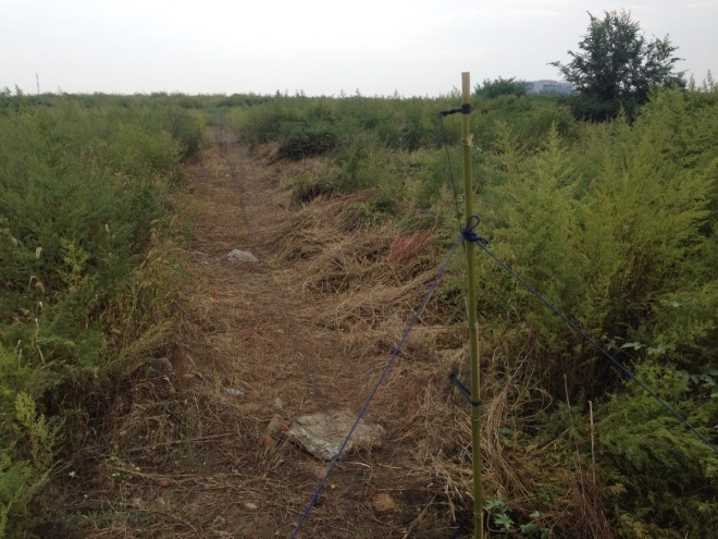 2015-09-09 Illegal nets in Shunyi