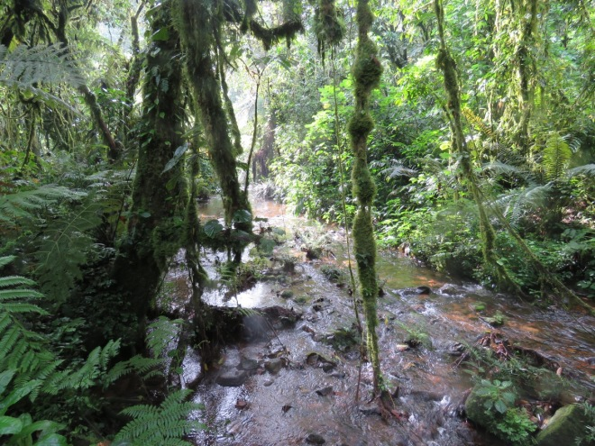 2015-11-15 forest at Bwindi with stream