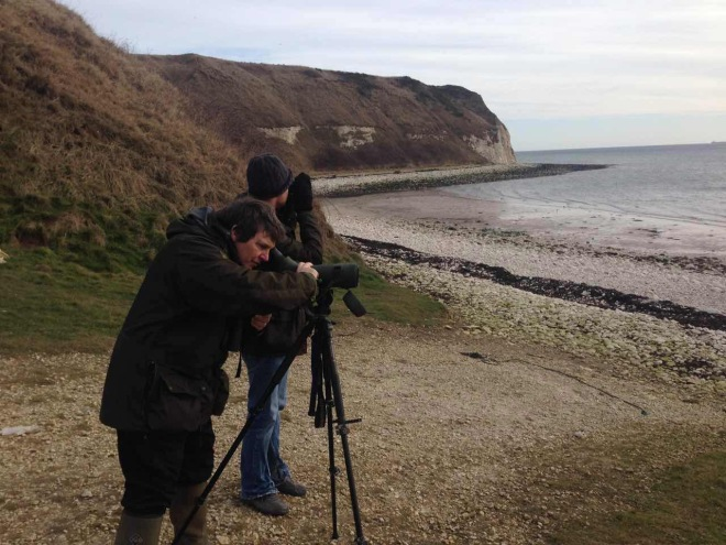 Checking out the local Rock Pipits at Flamborough South Landing, January 2015.