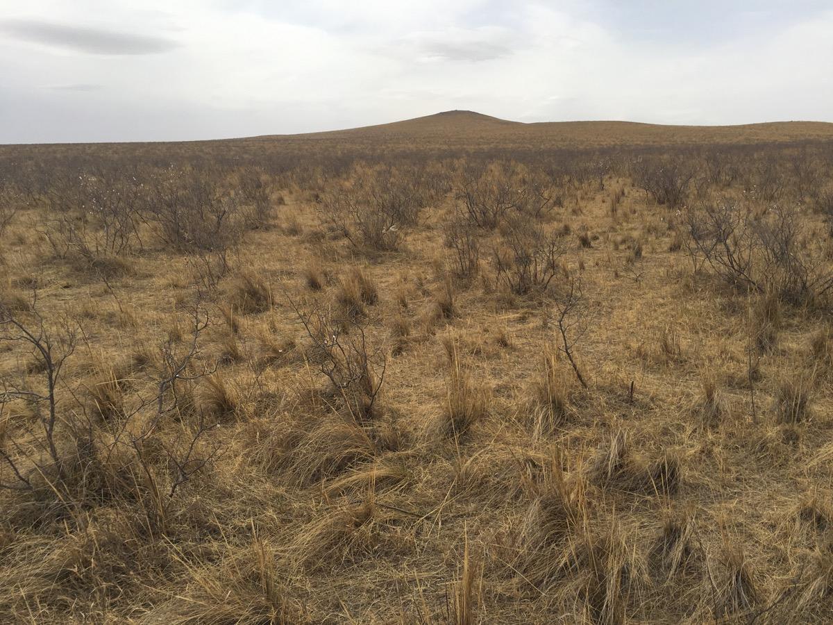 2016-05-08 Jankowski's Bunting site, Inner Mongolia