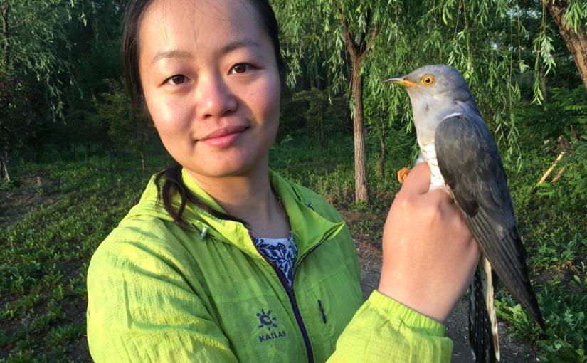 Beijing Cuckoo Project Shifts Up AGear