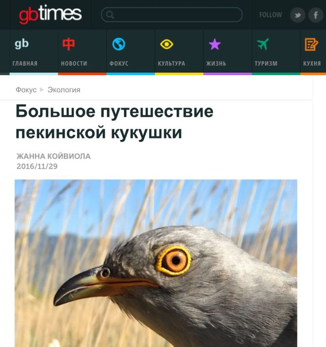 beijing-cuckoos-in-gbtimes