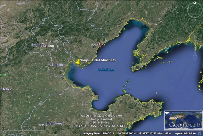 A Google Earth image showing the location of Nanpu, in the Bohai Bay.