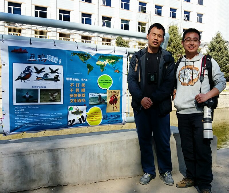 Volunteers Protect Beijing's Harlequin Duck