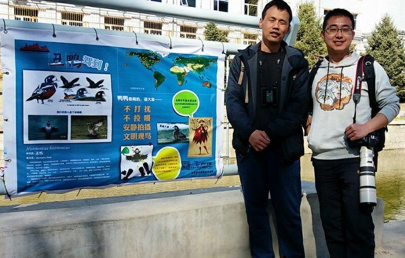 Volunteers Protect Beijing's HarlequinDuck
