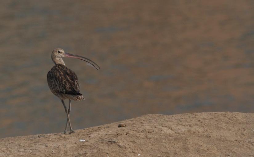 China Takes Important Step Towards Protecting Remaining IntertidalMudflats