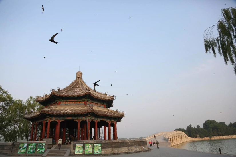 Beijing Swifts onBBC2