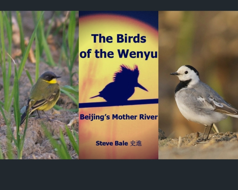 The Birds of the Wenyu, Beijing's Mother River