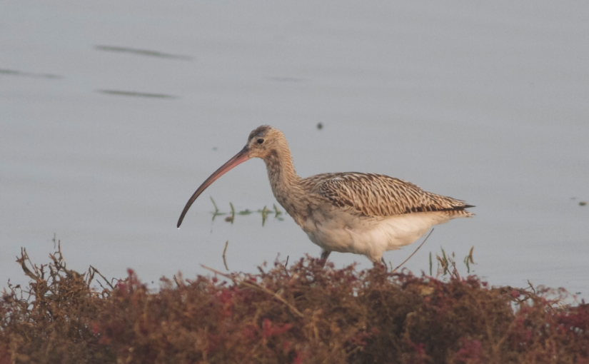 Huge Boost To The East Asian Australasian Flyway: China To Halt Coastal Land Reclamation