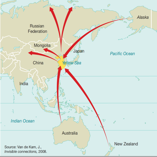 Map Of Asia Yellow Sea.Huge Boost To The East Asian Australasian Flyway China To Halt