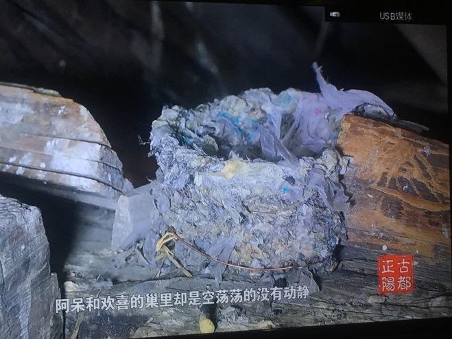 2018-07-03 Beijing Swift nest with plastic