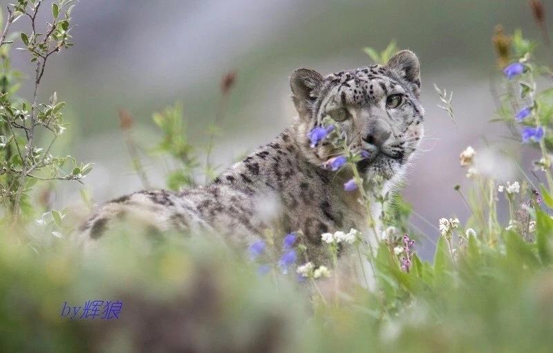 NatureWatch 2018: Citizen Science on the TibetanPlateau