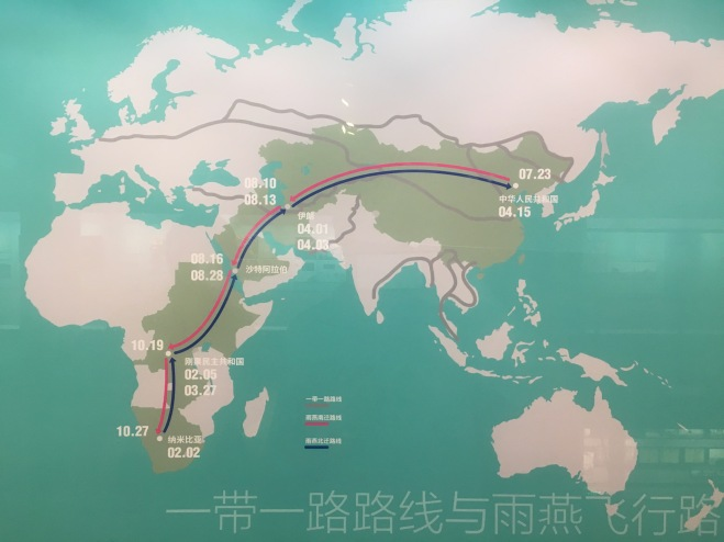 Beijing Swift ewxhibition migration route