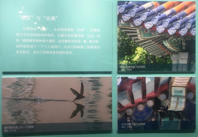 Beijing Swift exhibition photos