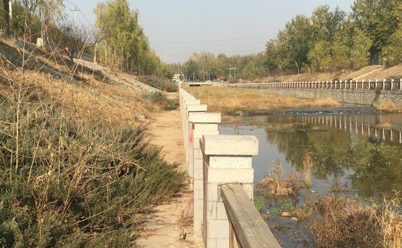 Wallcreeper in urbanBeijing