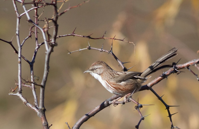 Ten birds to look out for in Beijing thisSpring