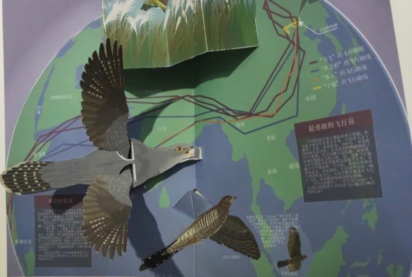 Beijing Cuckoos inspire new educational book for schools